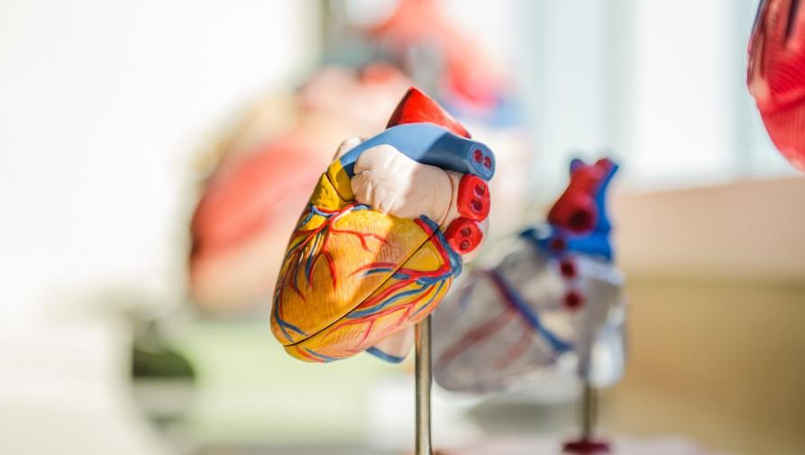 Rekordot döntött tavaly a szívtranszplantációk száma