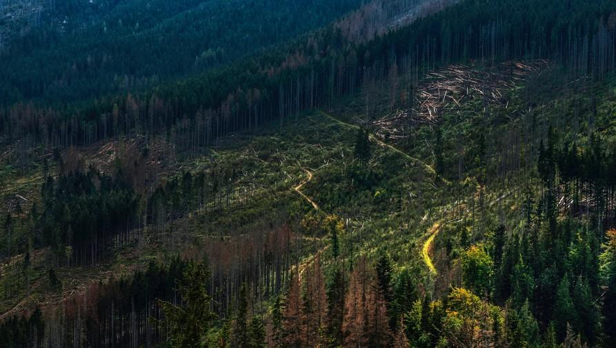 A felgyorsult erdőirtás példátlan szénkibocsátást eredményezett Délkelet-Ázsiában