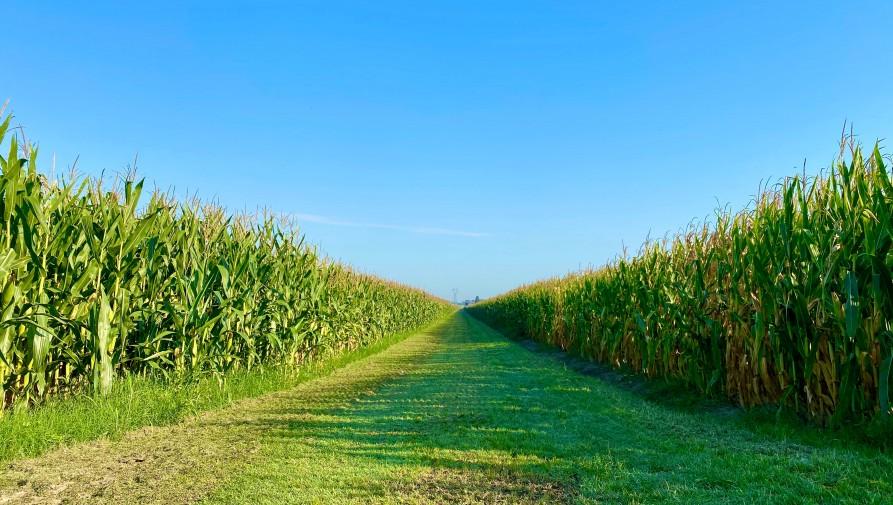 Az innováció segíti a fenntartható mezőgazdaságot