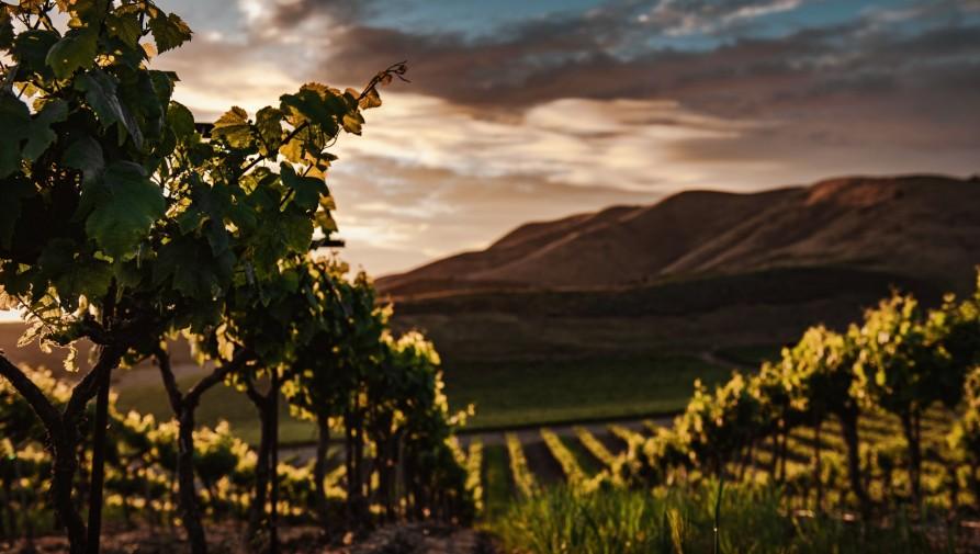 A hagyományt feladva növelik a champagne-i szőlőtőkék közötti távolságot